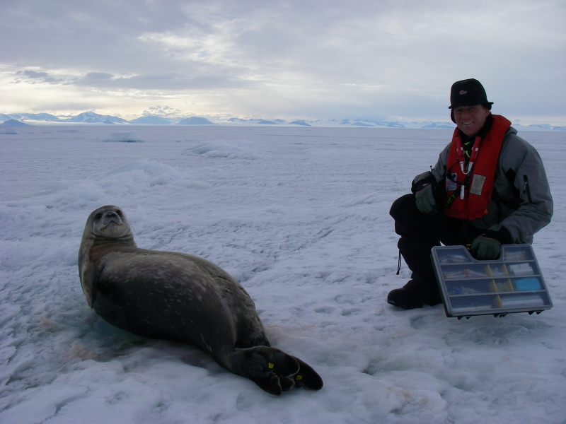 "Jeff Peneston: ""This is the smallest of the five Weddell seals that the team gathered data from on the hike across the sea ice. The largest weighed 318 kg (which is about 700 pounds). They are so peaceful, gentle, and confident of their safety in a world without predators above the sea ice, that they allowed the team to walk right up to them. Each seal would roll on to its back and look up at us as if to say, 'what planet are you from?' Both the seal and Dr. Jonas Tielmann were happy to pose for the camera!"" On the sea ice of McMurdo Sound, Antarctica.Credit to read: Photo by Jeff Peneston (PolarTREC 2008/2009), Courtesy of ARCUS"