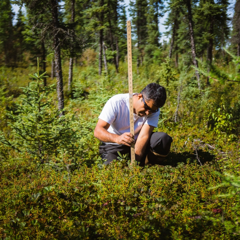 Santosh Panda measures permafrost depth. Nikolai, Alaska.